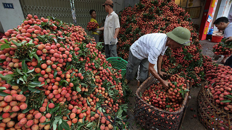 Bộ trưởng Lê Minh Hoan: Tình hình cấp bách, không thể biết tuần sau sẽ thế nào